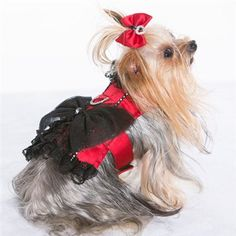 Cabaret - Corset Harness for your fashionista available at www.zoedoggy.com