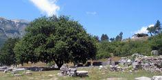 ©AR2013 #Grecia  my photo #Dodona my photo