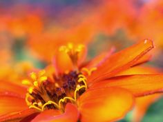 40 Amazing Macro Wallpapers 1600 X 1200 Px [Set 4] | Free HD Desktop Wallpapers for Widescreen, High Definition, Mobile