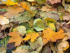 季節を感じられる落ち葉や枯れ葉のテクスチャまとめ http://design-develop.net/design/25-free-dried-leaf-textures.html