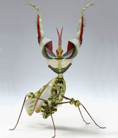 That's one fancy looking mantis!