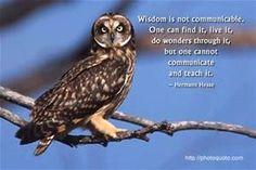owl sayings - Bing Images