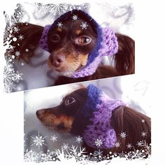 Coco surely is not happy with the idea to have a hat 😆 #thinkingaboutwinter 😁 #cocomalenjkayastranajamaika #RusskiyToy #РусскийТой #RussiskToy #RussianToy #KennelIrishano #OsloNorway #cutedog #knittingfordog #clothfordog #люблюнемогу #smalldog #miniaturedog #dogsofinstagram