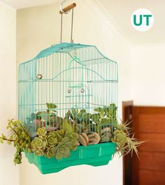 Do you love succulents as much as we do? If so, you will love this upcycled birdcage planter! Find out how to make your own succulent birdcage planter. Upcycle Home, Upcycled Home Decor, Upcycled Garden, Repurposed Items, Eco Garden, Garden Art, Garden Ideas, Buy Plants, Indoor Plants