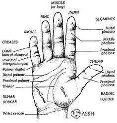 6570d118d19c79595277d9d7f8eae7be hand anatomy hand wrist 309 best anatomy images human anatomy, massage, hand therapy