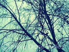 Dewdrop covered tree. <3 ♥