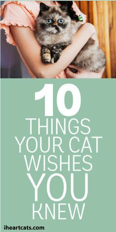 10 Things Your Cat Wishes You Knew
