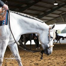 Top Trainers Discuss Tips on Buying Futurity Projects - GoHorseShow.com