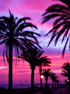 Palm Trees and Sunsets -Jimmy Floid in Cadiz, Spain