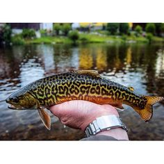 I wanna catch one of these this year