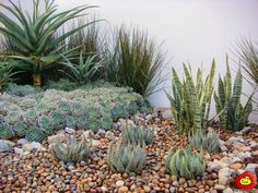 The Friendly Plant Fire Pit Landscaping, Landscaping Work, Landscaping With Rocks, Garden Landscape Design, Garden Photos, Water Features, Fire Pits, Backyard, Irrigation
