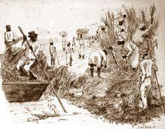 Koffieplantage, slavernijverleden Suriname.