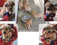 Milano: 5 CUCCIOLI IN CANILE: #regalo #cuccioli #cani #milano Vai all'annuncio: