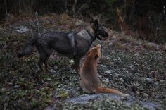 They could talk for hours. | Real-Life Fox And The Hound Best Friends Will Melt Your Heart
