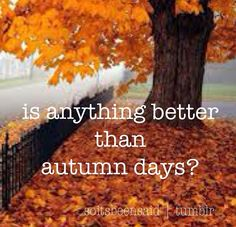 Quote Quotes Quoted Quotation Quotations is anything  better than autumn days? fall colours tree seasons life change