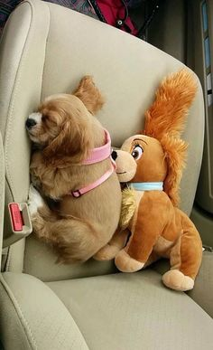 He must be Velcroed to the seat LOL! #CockerSpaniels #puppies #dogs Facebook.com/sodoggonefunny