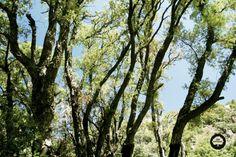 Mi bosque ideal es un lugar frondoso donde los únicos sonidos que se escuchan no están generados por los humanos. Trinidad Angeles Sanchez Avila