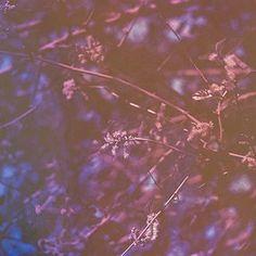 The film soup (@thefilmsoup) • Fotos y vídeos de Instagram Experimental Photography, Film Photography, Instagram, Plants, Soup, Brown, Inspiration, Biblical Inspiration, Brown Colors