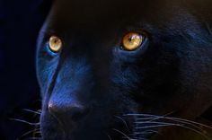 Black Panther cuz it just represents that dark, wise, mysterious, wild, deadly side and probably because my favorite character was Bageera in the Jungle book.