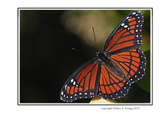 Excited to share the latest addition to my #etsy shop: Butterfly Photo 5x7. Print and send as Valentine Cards or Frame as Gift or Treat for Yourself. Receive a FREE Note Card with Purchase. #naturephoto