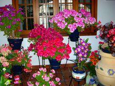 Patios 2012 - Flowers