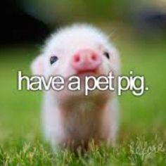 I wanna pet pig. :)