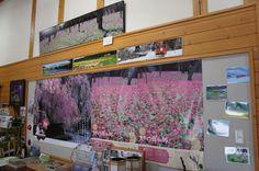 最寄駅は根津。近くの田んぼと、かたくりかん館。 春はかたくりの花畳、信じらないほど大規模に咲き誇る。 #jidori0825 #秋田 #内陸線 ちょい北の駅から雨が少し。 http://p.twipple.jp/RX8Ml |markの投稿画像