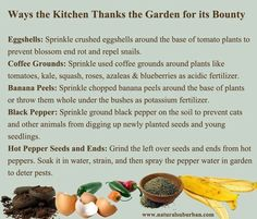 Natural repellents and fertilizer from kitchen scraps. Uses For Coffee Grounds, Living On The Edge, Tomato Plants, Natural Garden, Hobby Farms, Grow Your Own Food, Egg Shells, Edible Garden, Organic Recipes