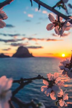 """Es Vedrà, Ibiza, with almond flowers framing the foreground. Previous pinner wrote, """"Ibiza is just beautiful, even in the winter! Beautiful Sunset, Beautiful World, Beautiful Places, Belle Photo, Dream Vacations, Pretty Pictures, Wonders Of The World, Places To Go, Nature Photography"""