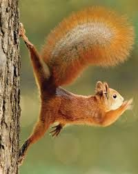 Image result for squirrel lying in a hand