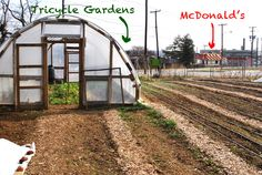 My sister Sal is the Executive Director of Tricycle Gardens in Richmond, VA. I love this photo of their community garden right across the street from McDonald's. Re-vegetating food deserts!