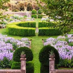 Boxwood garden plants are drought-tolerant. Properly mulching the shallow-rooted boxwood garden plants helps retain moisture and keep roots cool. Boxwood Plant, Boxwood Garden, Formal Gardens, Outdoor Gardens, Porches, Boxwood Landscaping, Farmhouse Landscaping, Landscaping Ideas, Parks
