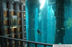 Diving On A Cruise Ship