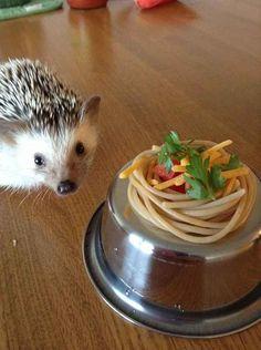 Q: Do they eat gourmet cuisine?