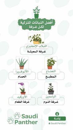 Side Garden, Veg Garden, Easy Care Plants, Plant Care, Indoor Water Garden, Indoor Plants, House Plants Decor, Plant Decor, Growing Vegetables