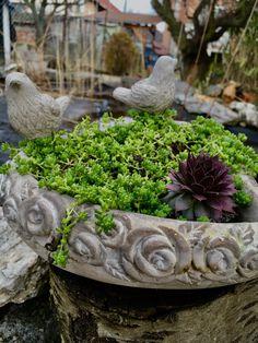Garden#diy#houseleek#spring