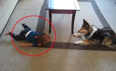 This Dog And Baby Share An Amazing Friendship… Wait Until You See Them In Action. Adorable!