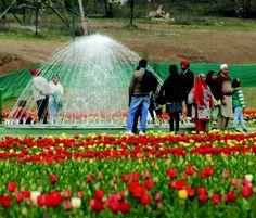 Tulip Garden Jammu And Kashmir Tourism, Beautiful Places, Most Beautiful, Tulips Garden, Srinagar, Heaven On Earth, Outdoor, Outdoors, Outdoor Games