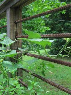 DIY Garden Fence Ideas to Keep Your Plants Rebar railing - I really like this.Rebar railing - I really like this. Diy Garden Fence, Garden Trellis, Garden Gates, Trellis Fence, Patio Fence, Deck Pergola, Small Pergola, Bamboo Fence, Pool Fence