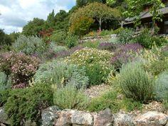 Nadine's Garden