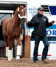 2012 Derby champ I'll Have Another arriving in Baltimore for the Preakness.  Photo: courtesy of The Preakness Stakes.