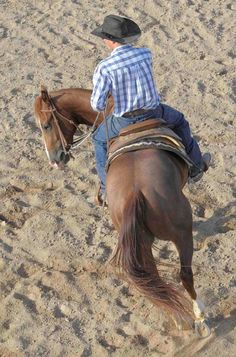 """Bending"" is like yoga for horses. Here is why it is important and helpful tips on the subject"