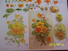 "China Painting Study 34 ""Nasturtiums"" Gladys Galloway 