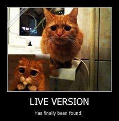 LIVE VERSION, Ahhh..!?