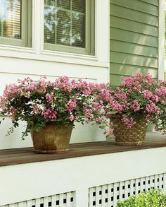 52 best pink plants images on pinterest in 2018 pink plant infinitini brite pink crapemyrtle lagerstroemia indica mightylinksfo