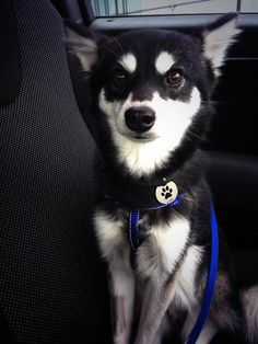 I'm pretty sure no other fandom out there pins about a dog such saying but we're cool for this so yeah! But.. LOKI!