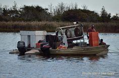 Oyster farmers in Ni