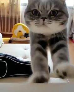 I coming,Funny, Funny Categories Fuunyy Source by Cute Cats And Kittens, I Love Cats, Crazy Cats, Kittens Cutest, Cute Funny Animals, Cute Baby Animals, Animals And Pets, Funny Cats, Funny Cat Photos