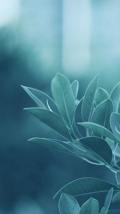 Green Leaves #iPhone 5s #Wallpaper | More free wallpapers in http://www.ilikewallpaper.net/iphone-5-wallpaper/.