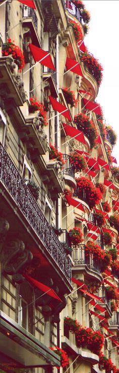 Avenue Montaigne in Paris - red flowers